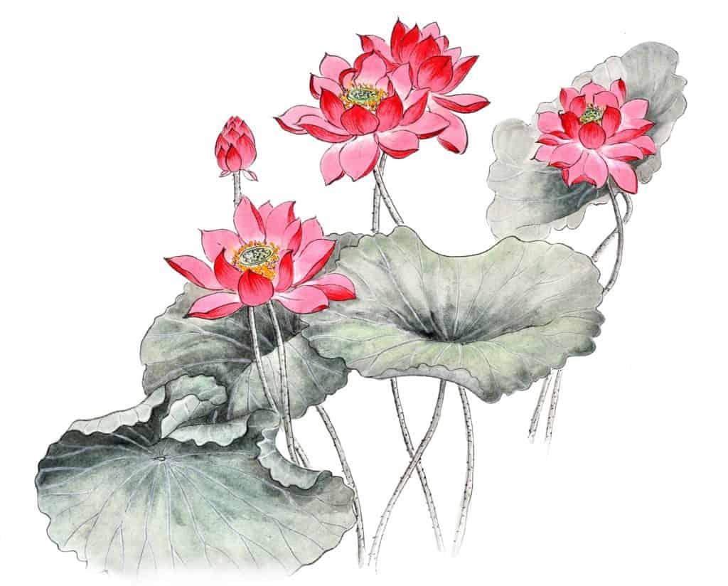 Lotus as a strength symbol