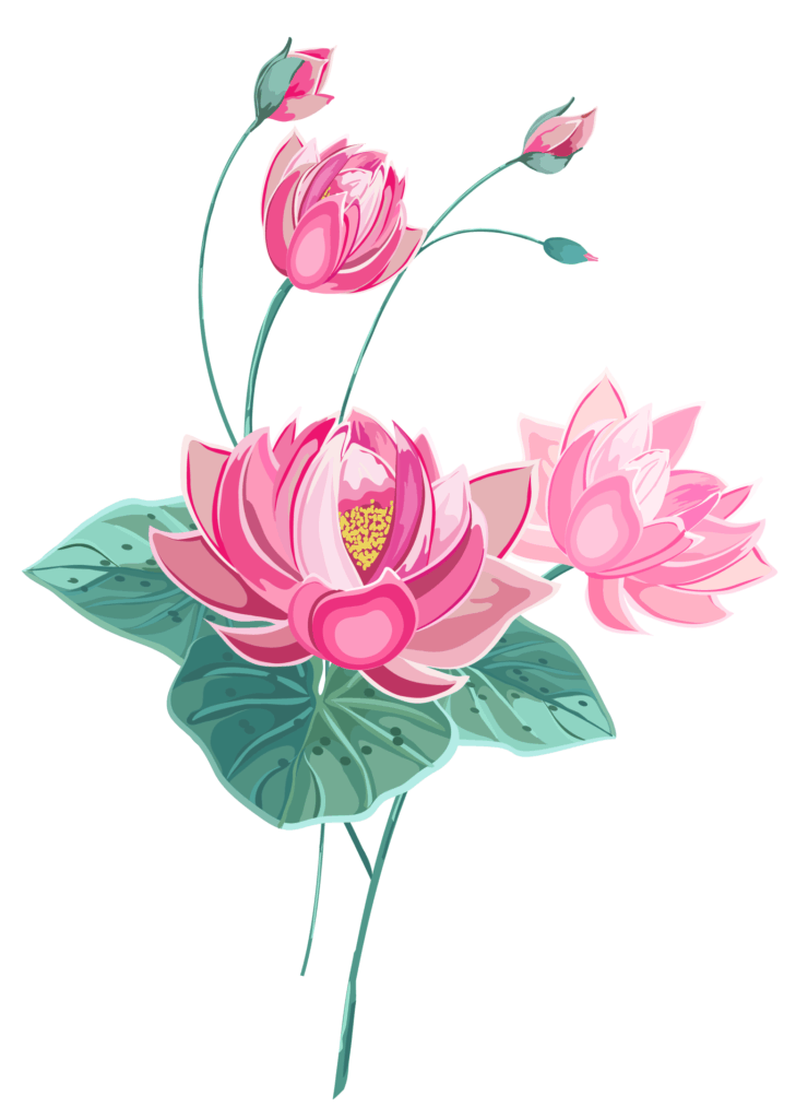 A Pink Lotus Flower Illustration