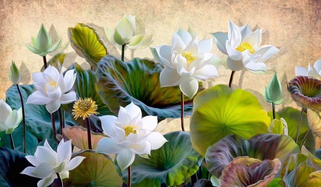 White Lotus Flowers Illustrated