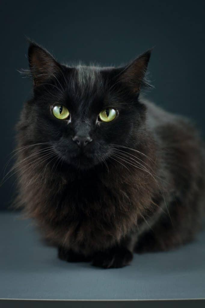 Black Cat As a Death Symbol