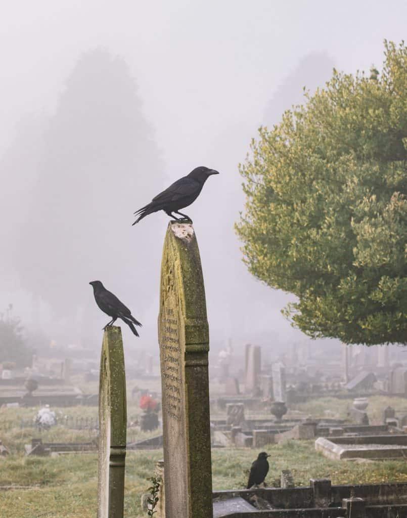 Crows, Birds Symbolizing Death in Graveyard