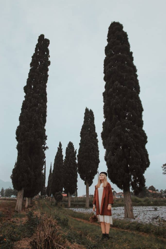 Cypress Trees And a Woman