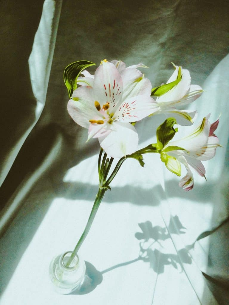 White Lilies, Flowers for Funerals