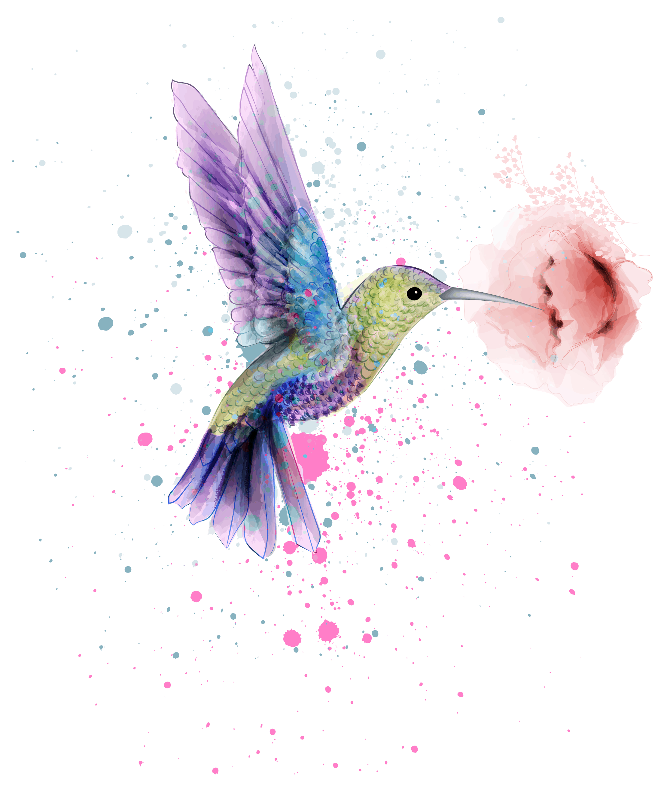Hummingbird Symbolism and Meaning Explained, a Humming Bird Illustration Image