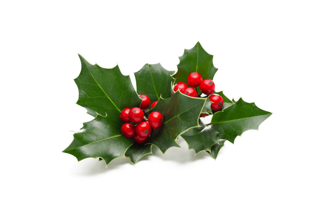Mistletoe a Good Luck Symbol