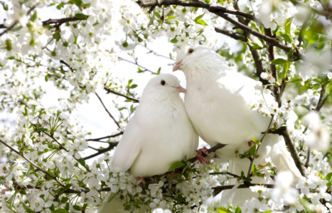 Symbols Of Love Around The World: The Extensive List